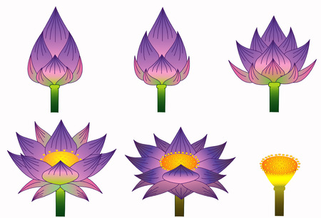 Thai purple lotus style Illustration
