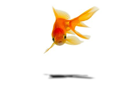 glod fish Stock Photo