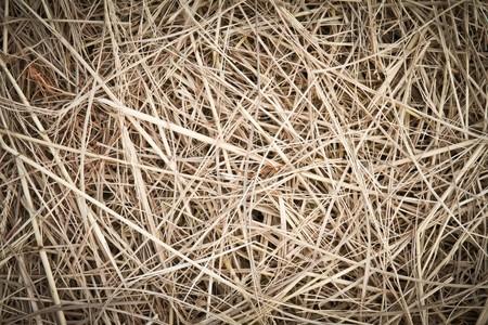 straw  photo