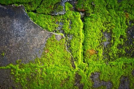 grass close up: lichens texture  Stock Photo