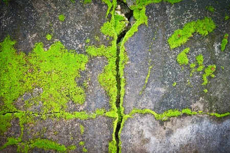 lichens texture  Stock Photo - 7935261