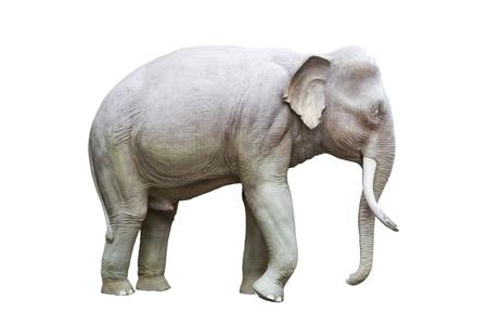 Elephant statue  photo