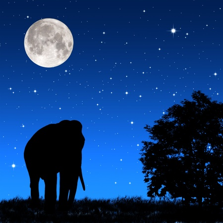 lambent: Shadow elephant tricky at night  Stock Photo