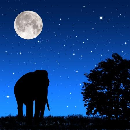 animales safari: Sombra elefante complicado por la noche
