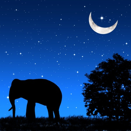 Shadow elephant tricky at night Stock Photo - 9252539