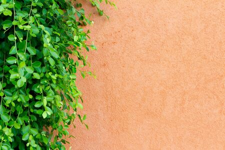Wall and ornamental plants Stock Photo - 9584840