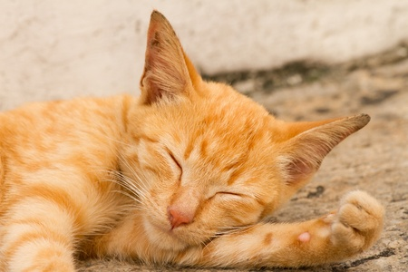 orange cat: cat sleep