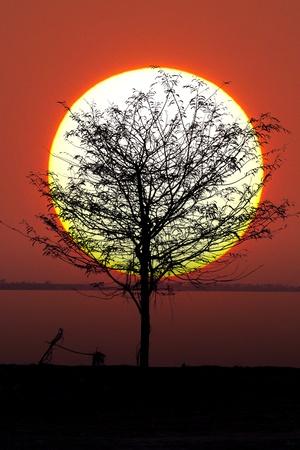 Tree and sun  photo