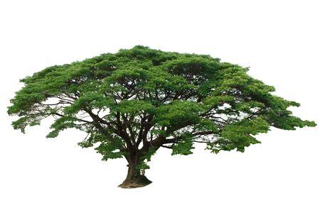 arboles frondosos: Árboles