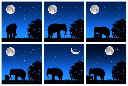 Collection shadow elephant tricky at night  photo