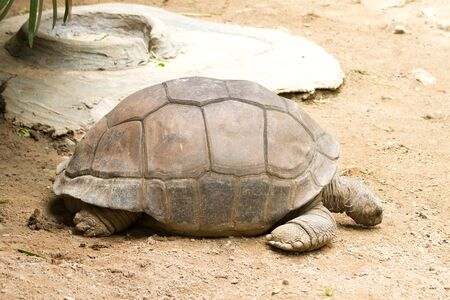 Giant tortoises  photo