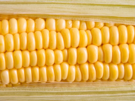 zea: Zea mays  Stock Photo