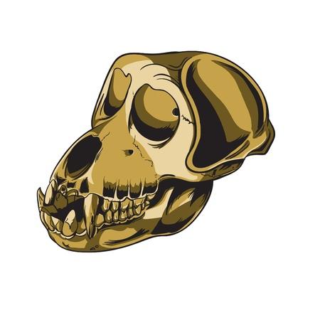 Monkey skulls Stock Vector - 21860499