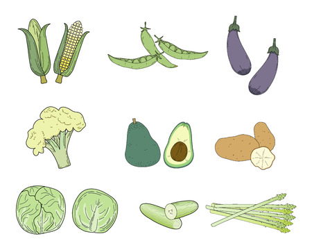 potato field: The vector set of vegetables