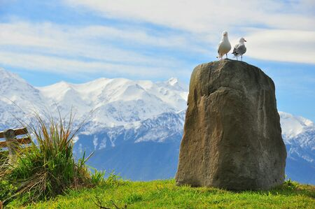 soulmate: Landscape of New Zealand