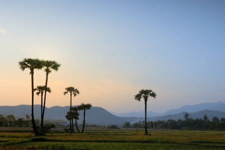 landscape of Chiangmai Thailand Stock Photo - 10269781