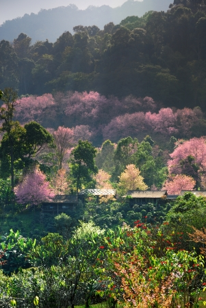 Cherry blossom pathway in a beautiful landscape garden photo