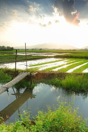 Small canal in to the rice farm with sunset background Stock Photo - 15527895