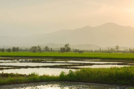 lake district england: Rice field in sunset background