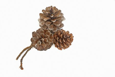 pine cones on a white background photo
