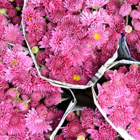 barberton daisy: Gerbera , Barberton daisy