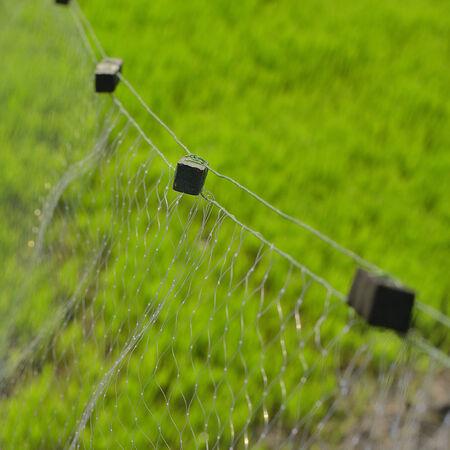 entrap: Mist net for entrap bird Stock Photo