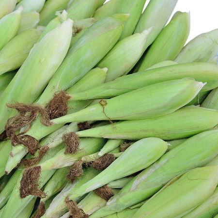 corncob: fresh maize corn