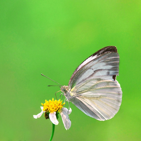 beuty of nature: Butterfly and flower in Green background  Stock Photo