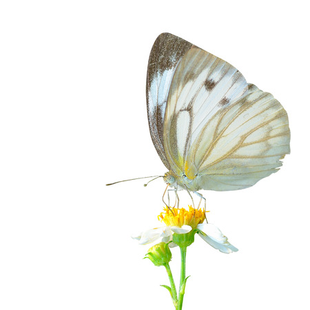 beuty of nature: Butterfly and flower in isolate white background  Stock Photo