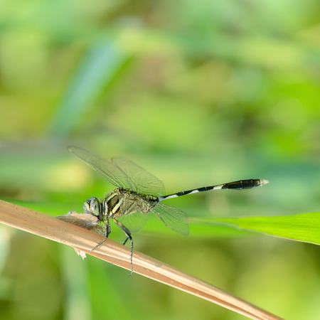 beuty of nature: Dragonfly
