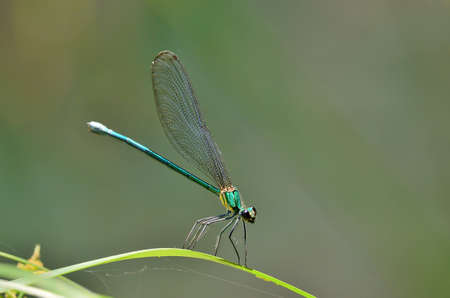 vividly: Dragonfly on the best perch in green background