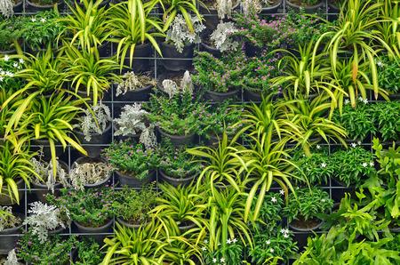 垂直庭園 写真素材