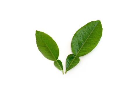 pomelo leaves