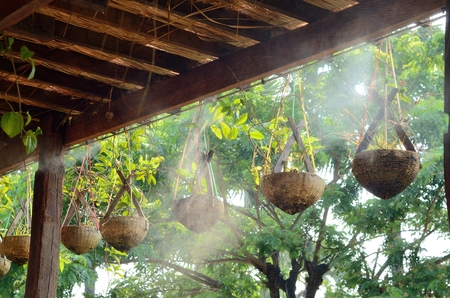 rafter: Water plant hang on rafter in small garden Stock Photo