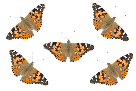 vanessa: Greeting Card or invitation for butterfly (Painted Lady) theme Stock Photo