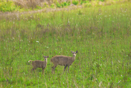 deer stand: Deer stand midst the pasture Stock Photo