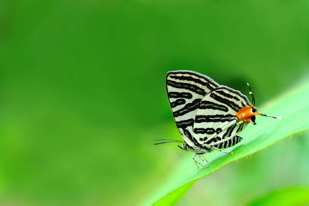 silverline: Butterfly and green leaves (Club Silverline)