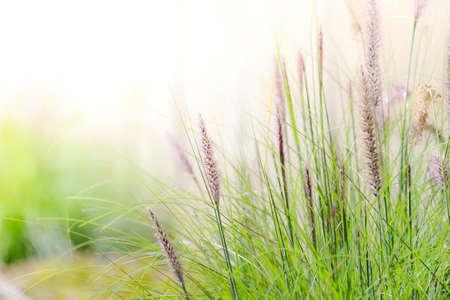 horticultural: Beautiful closeup meadows horticultural show