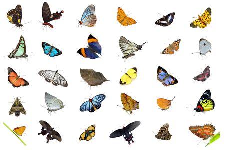 papillon: Collection de papillons Banque d'images
