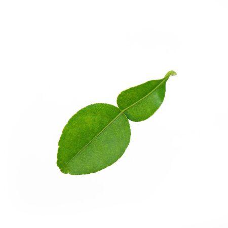 on leave: Kaffir lime leave