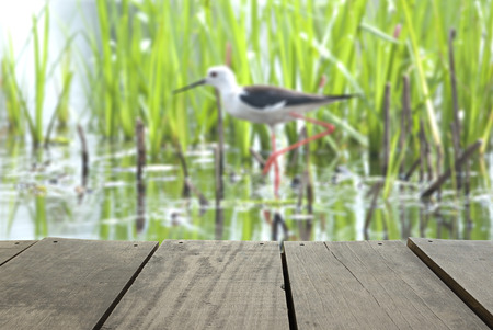 Defocus And Blur Image Of Terrace Wood And BlackWinged Stilt Searching For  Some To Eat For