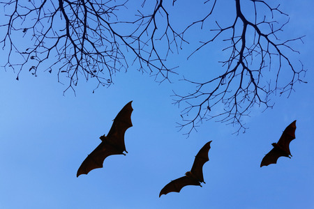 usage: Bats silhouettes and beautiful branch for background usage