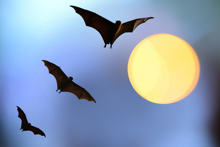 horrify: bat silhouettes with full moon  Halloween festival Stock Photo