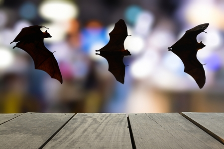 terrify: Terrace wood and bats flying in sky with bokeh of city lighting for background usage Stock Photo