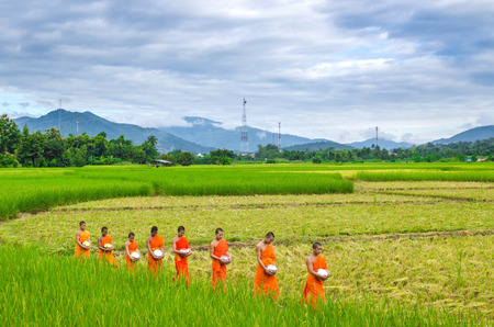 CHIANGMAI THAILAND  OCT 24: Every day very early in the morning the monks walk in the field to beg give food offerings to a Buddhist monk on Oct 24 2014 in Maechaem Chiangmai Thailand