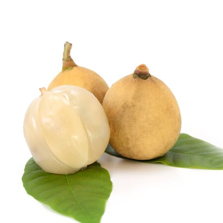 watery: Langsat or Lanzones fruit is endemic to Southeast Asia. watery flesh with a sweet flavor and refreshing, but some variety are sour. Stock Photo