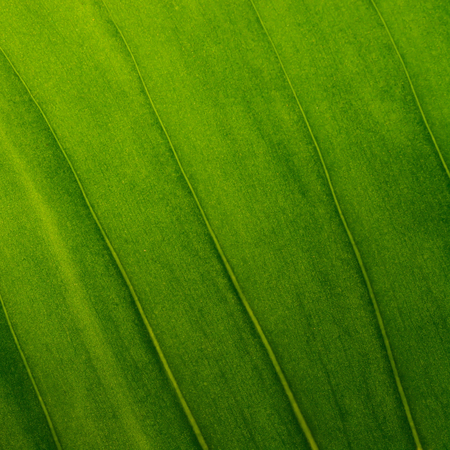 green  pattern: Green leaves as background texture