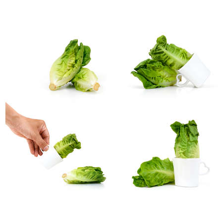 lactuca: Baby Cos lettuce put in beautiful cup isolate on white