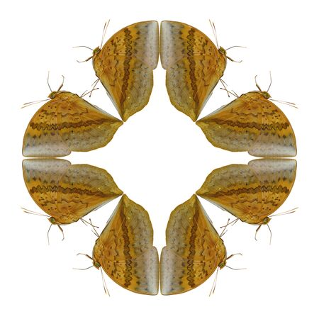 harmonious: Geometric shapes of butterfly on white background look like harmonious Stock Photo