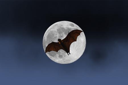 満月 - ハロウィーン祭のバット シルエット 写真素材